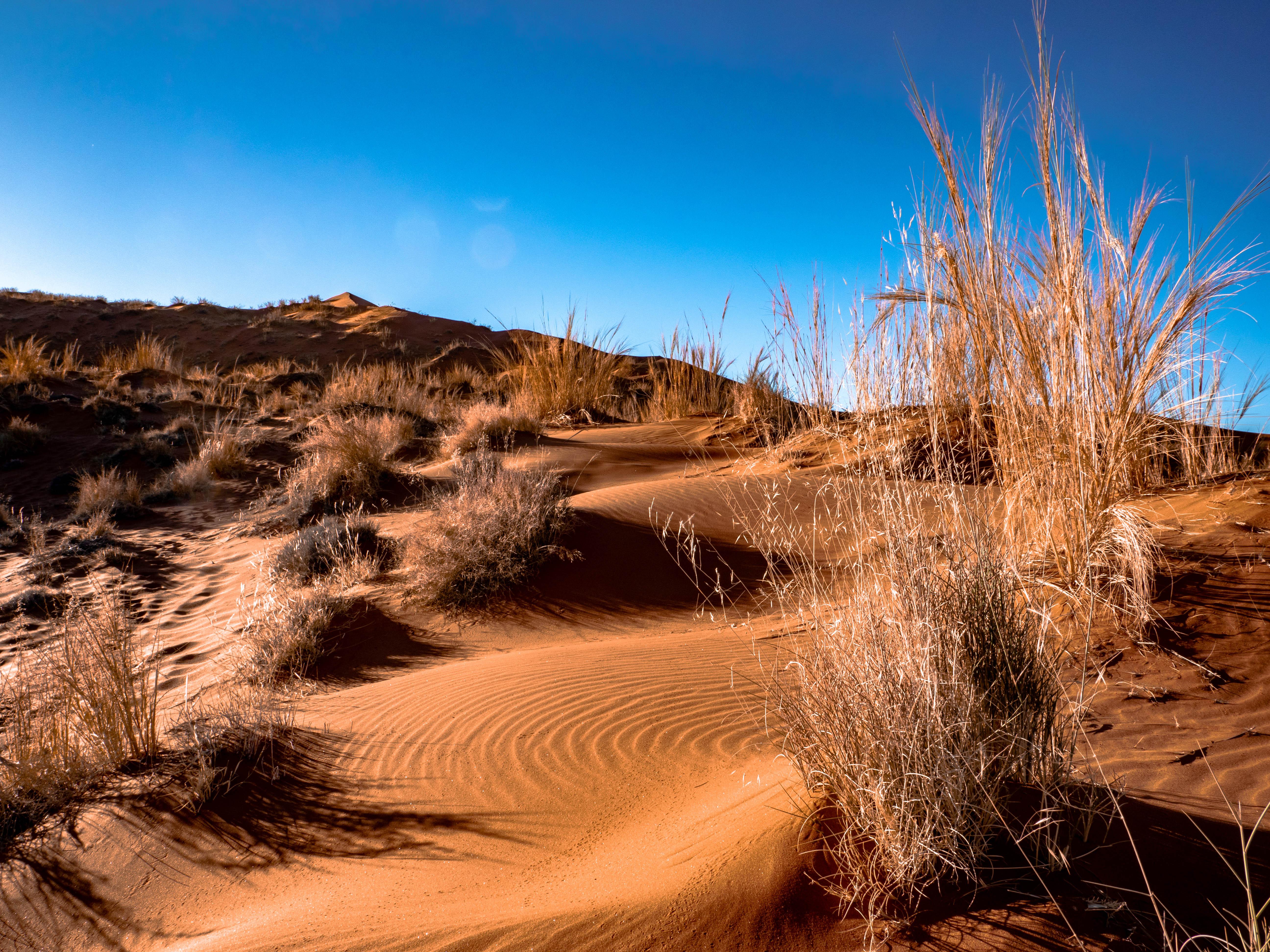 dune elim2