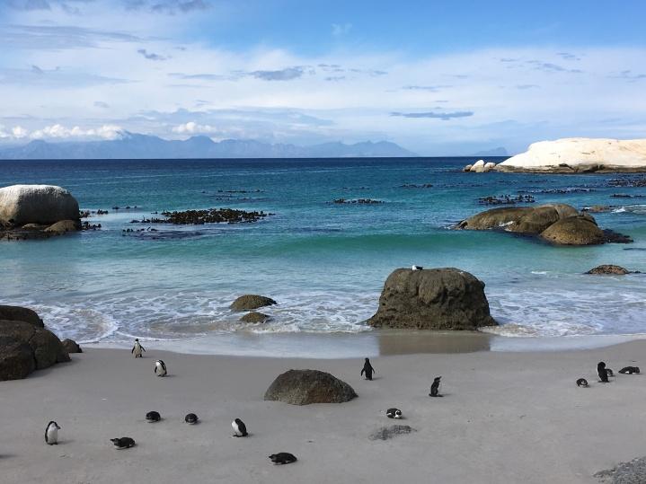 pingouins Anna 1